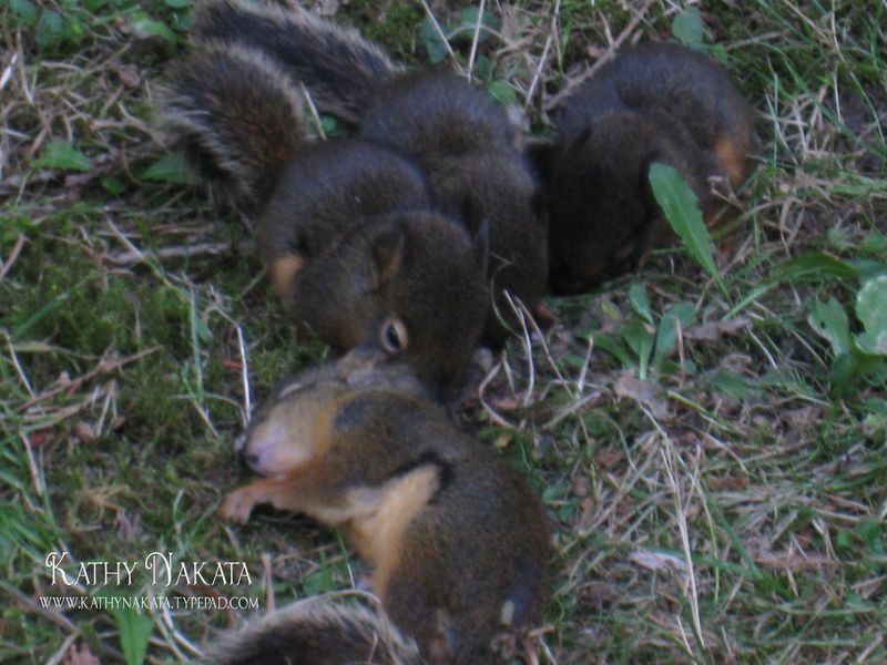Squirrels2