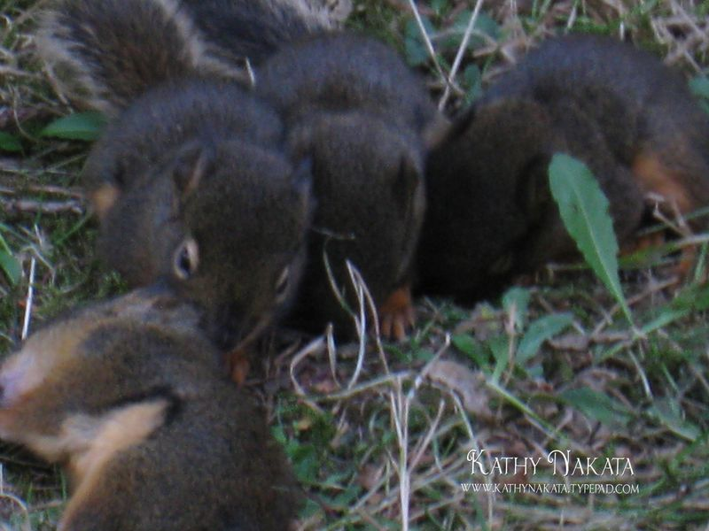 Squirrels3